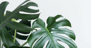 10+ Unearthly Modern Minimalist Furniture Ideas