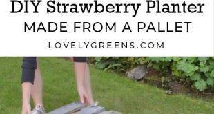 Wie man einen Erdbeerpaletten-Pflanzer macht